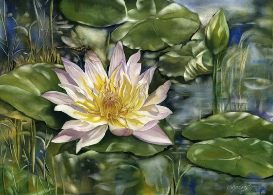 waterlily with dragonfly