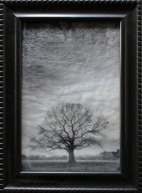 Hagley Tree