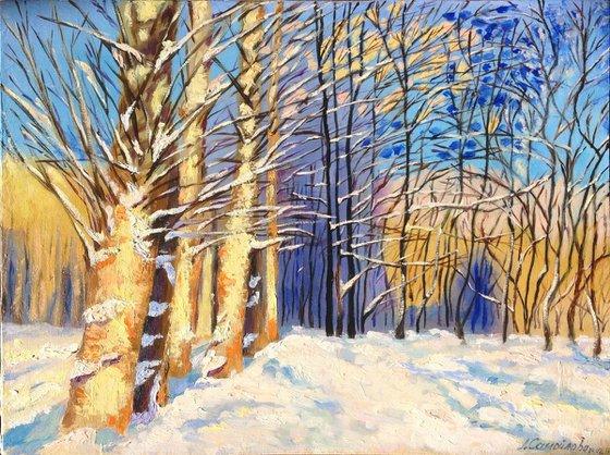 Poplars in the snow