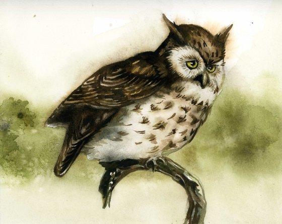 screech owl watercolor