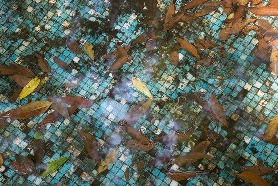 Leaves in tiled pool
