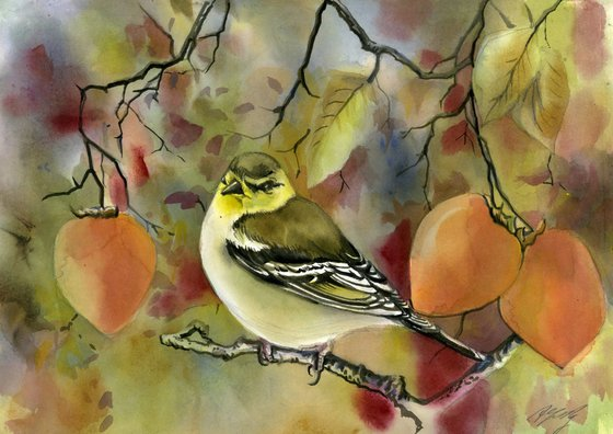 finch with persimmons