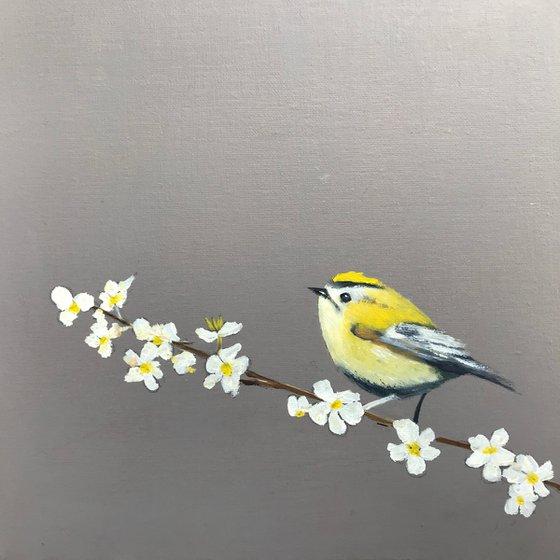 Gold Crest on Cherry Blossom