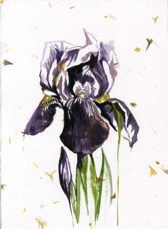 iris watercolor on hand-made paper