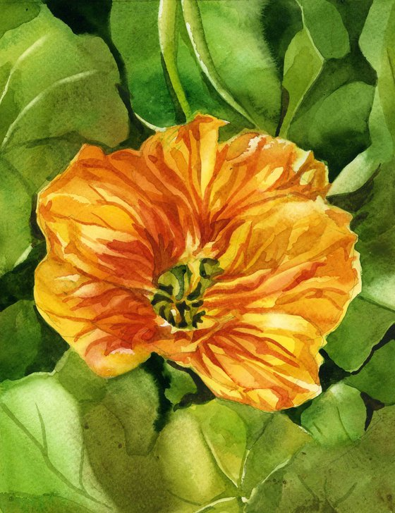 yellow nasturtium watercolor floral
