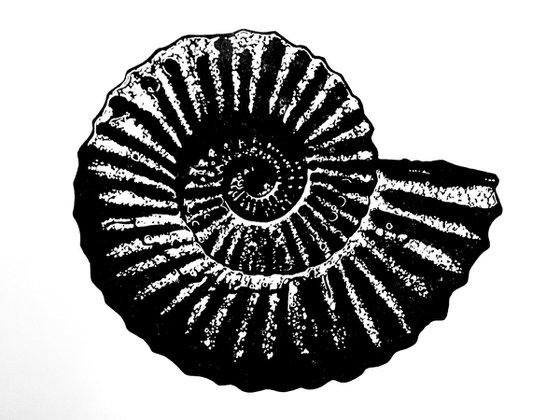Ammonite single colour (black on white)