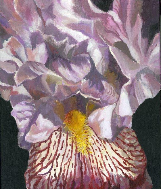 iris in pink acrylic painting