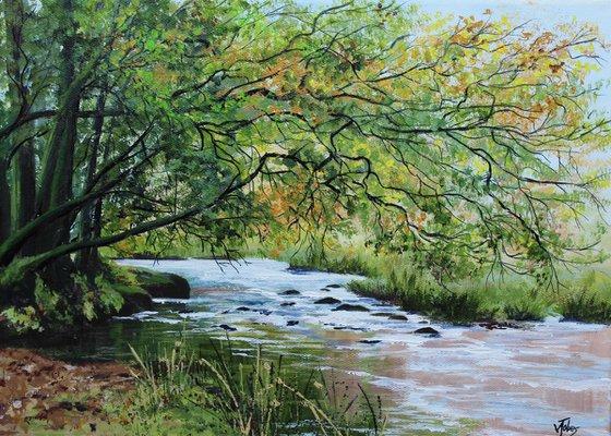River Barle, Exmoor