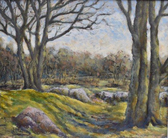 Woods near Burrator