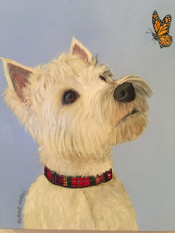 TOBY - WEST HIGHLAND TERRIER