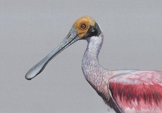 "Original pastel drawing bird ""Roseate spoonbill"""
