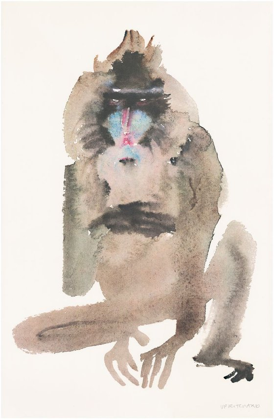 Surly Baboon