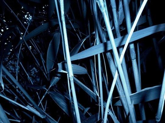 Bambous bleutés (1)