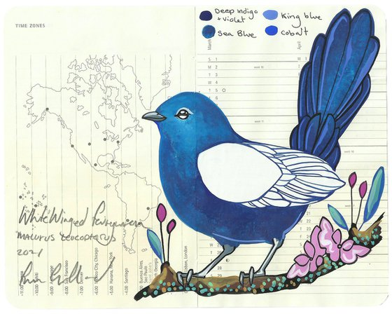 Birds of Australia: White Winged Fairywren