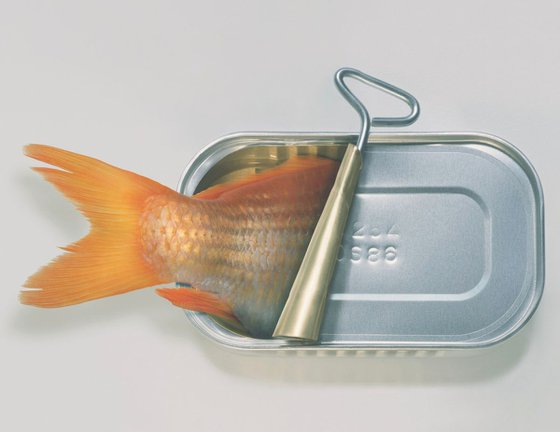 Fish Can't