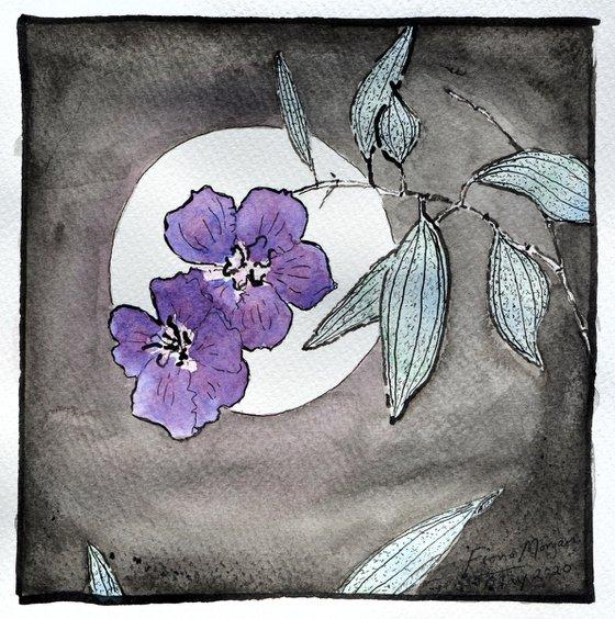 Full moon greetings May 2020