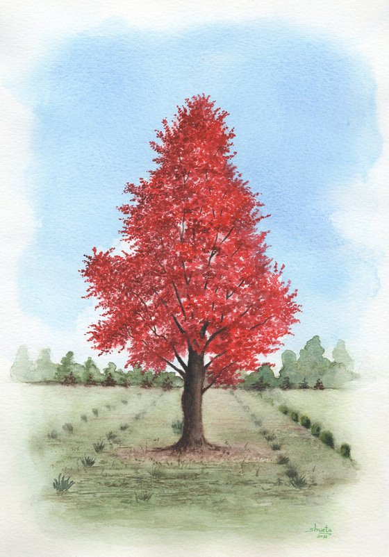 Red Maple Tree Watercolor Painting