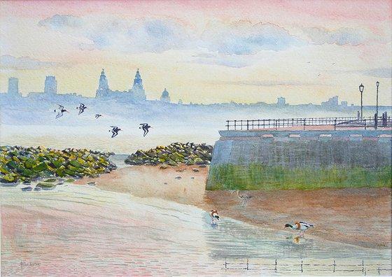 Shorebirds - River Mersey