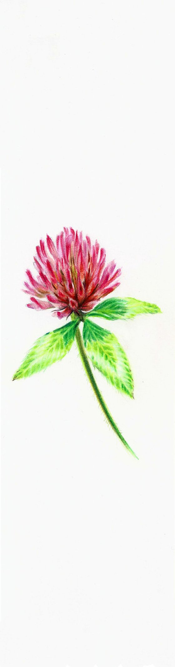 Clover Flower - from my Wildflowers Bookmarks Collection