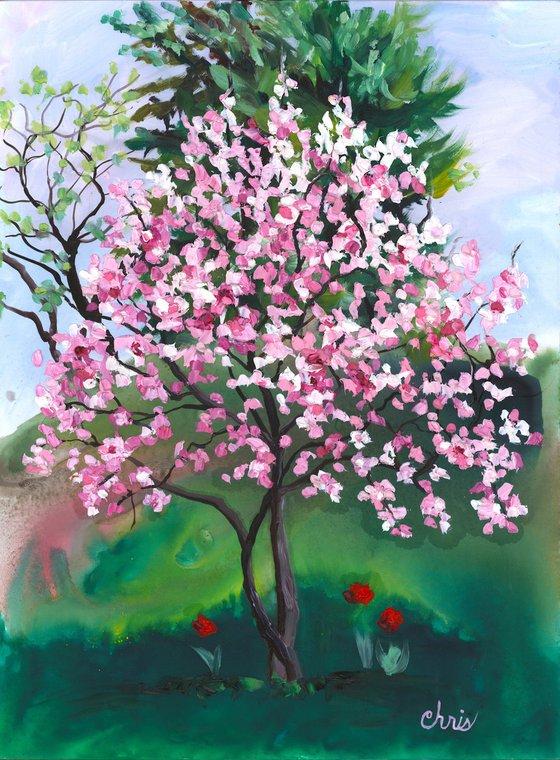 Little Pink Magnolia Tree