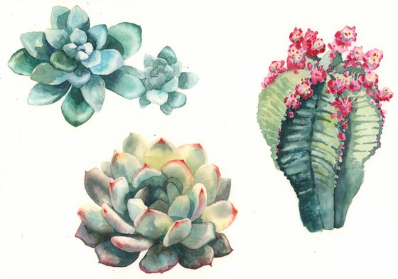 Botanical Cactus Painting - Original Watercolour Cactus