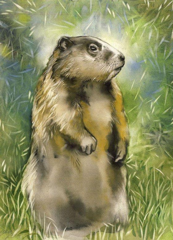 Grounghog visitor