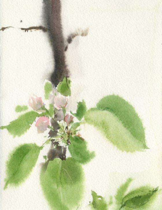 Apple blossoms 2. Tender flowers