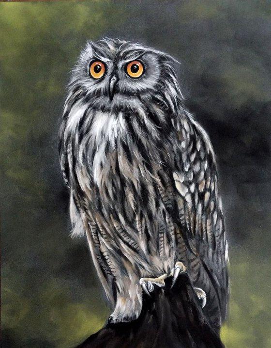 "Eagle Owl  (Original Pastel Painting) 11"" x 14"""