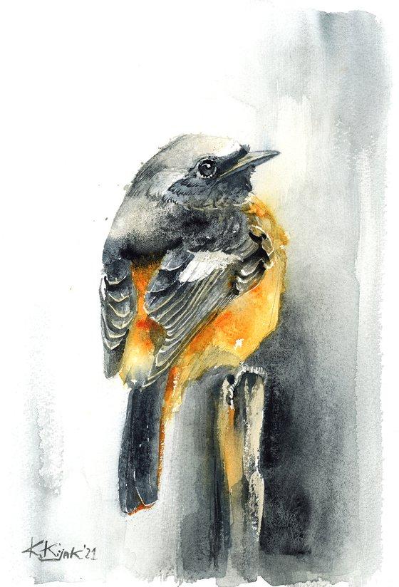 Common Redstart, watercolor of birds and wildlife