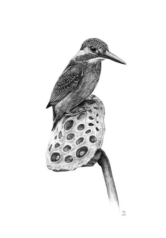 "Original graphite pencils drawing bird ""Common kingfisher"""