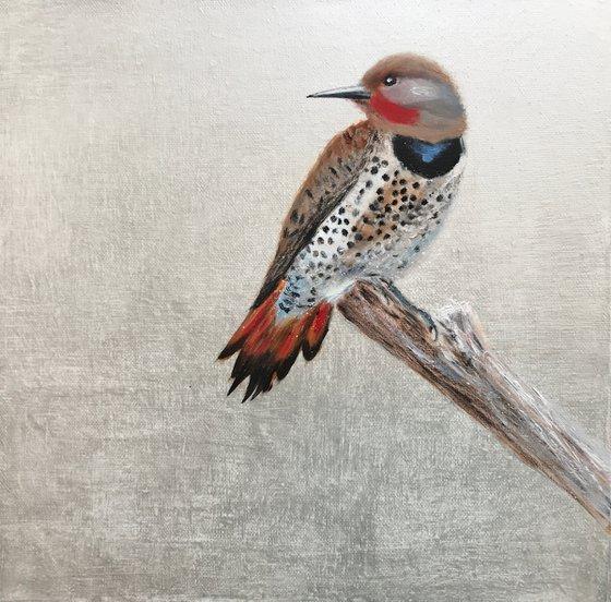 The Flicker Bird ~ on silver