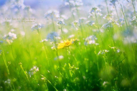 One breath of summer