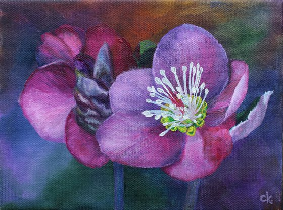 Two Hellebores