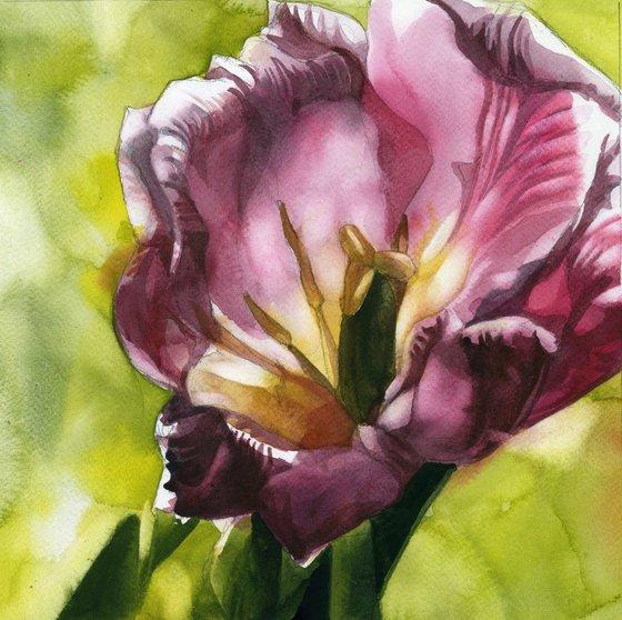 tulip in the light