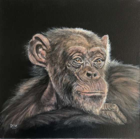 Budongo Chimp