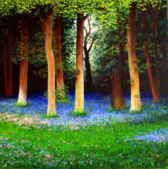 Spring Woodland Walk
