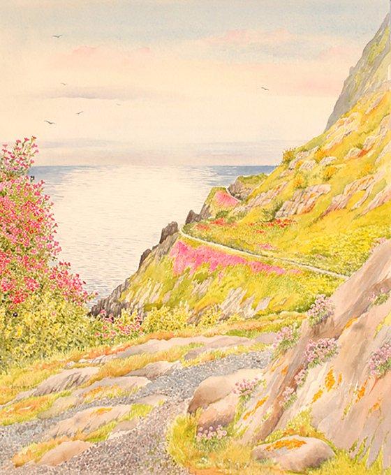 Cornish summer cliff walk