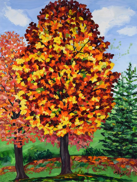 Tall Maple in Red & Gold