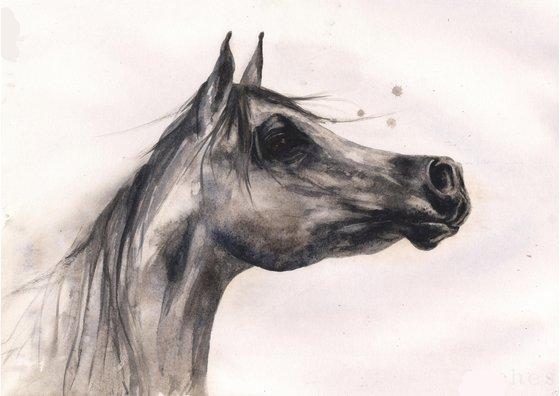 Watercolour Horse Painting - Original Grey Arab - Framed