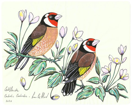 Goldfinch and Clematis