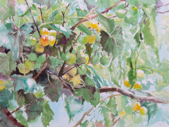 Grapes II