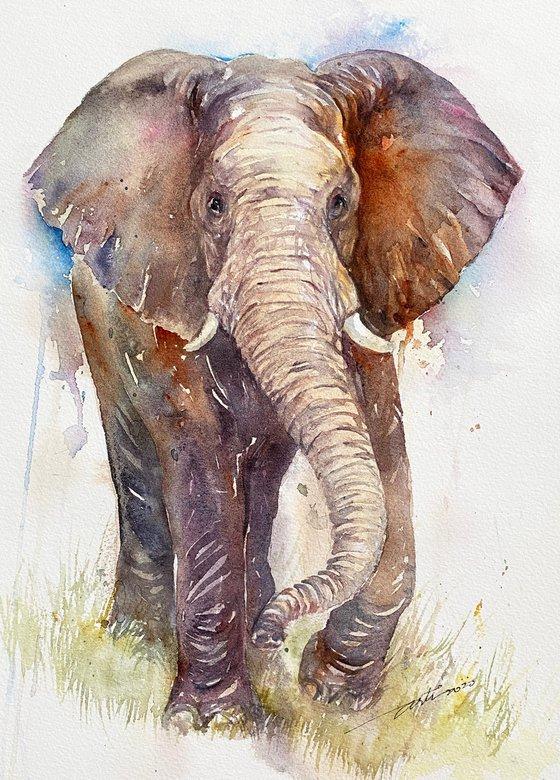 Elora the Elephant