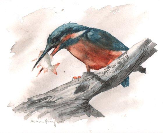 Watercolour Kingfisher - original painting