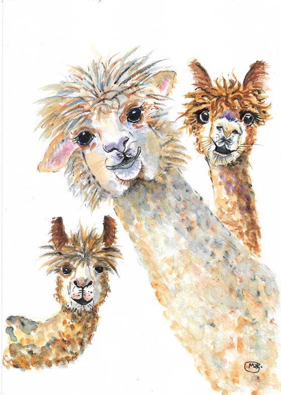 Alpaca Three. Cute animals