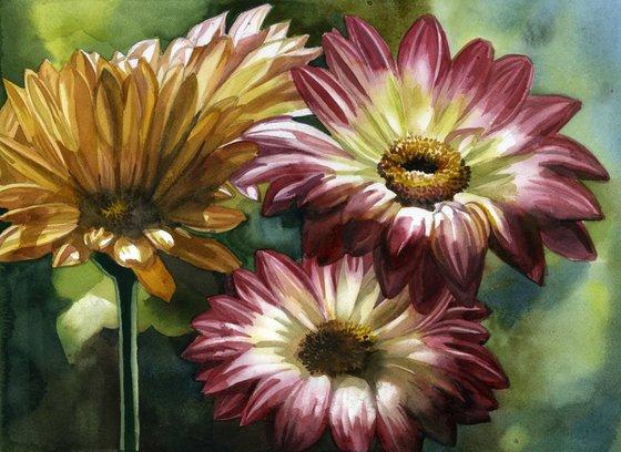 glorious gerbera watercolor floral