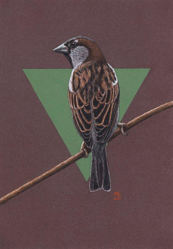 "Original pastel drawing ""House sparrow"""