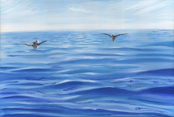 Ocean Gulls