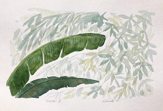 Tropics VI