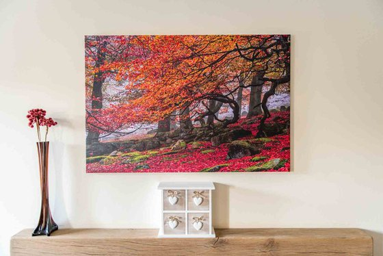 """Deep In The Forest... - 36x24"""" LARGE Limited Edition Canvas Print"""