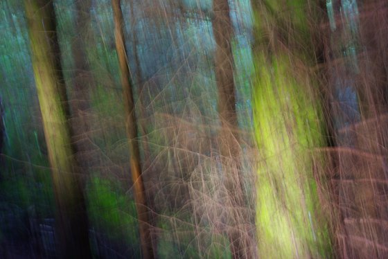 Into the Woods, abstract impressionist landscape